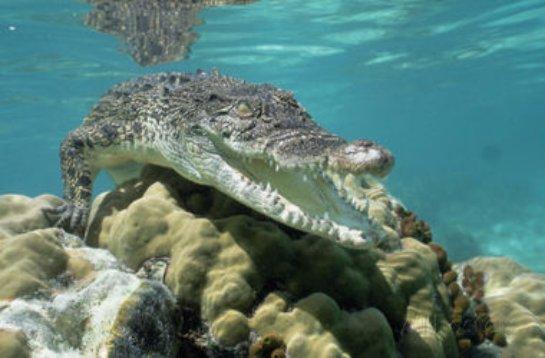В Тунисе археологи обнаружили останки древнего крокодила гигантских размеров