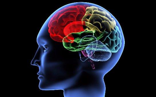 Бельгийские ученые доказали, что время года влияет на умственные возможности человека