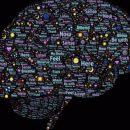 В человеческом мозге найдены неизученные области